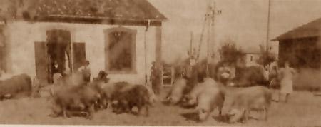 La storica foto con, sullo sfondo, Romilio, Giuseppe, Umberto, Gino e Mario Delporto